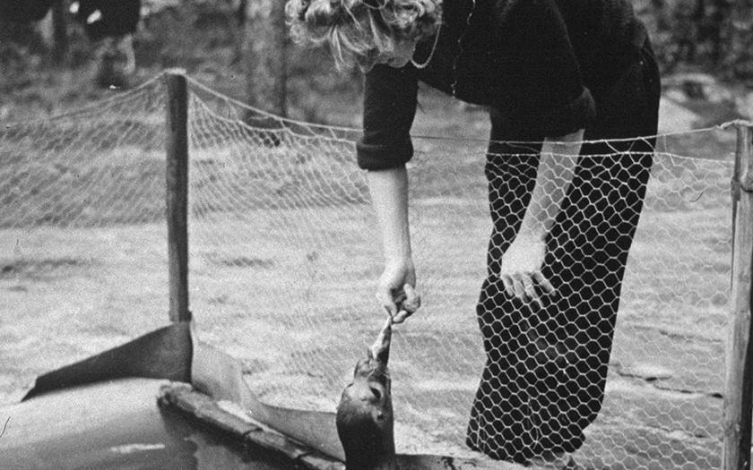 Mevrouw de Haan voert een zeehond