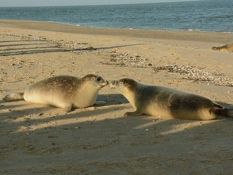 Twee zeehonden op het strand