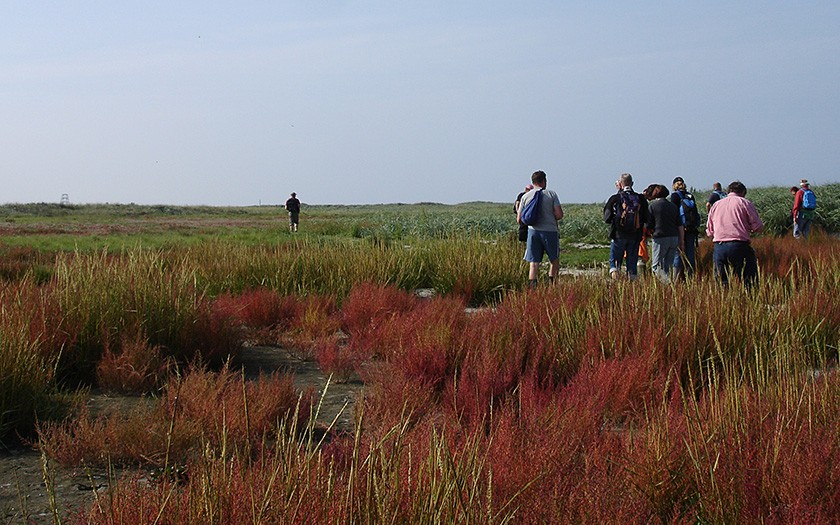 Excursion on Rottumeroog