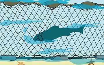 Drawing of a porpoise entangled in a large-mazed gill net