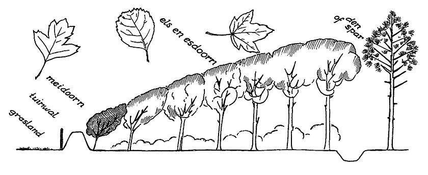 Tekening van een windsingel van bomen