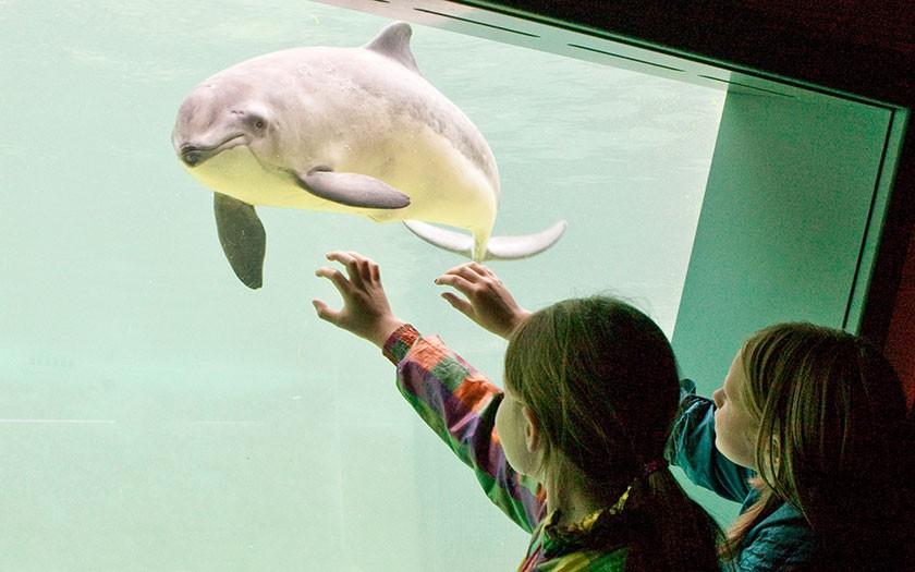 Kinderen bekijken bruinvis bij Ecomare