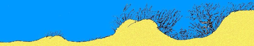 Tekening van duinvorming -5; Vijf stadia van duinvorming (© Ecomare)