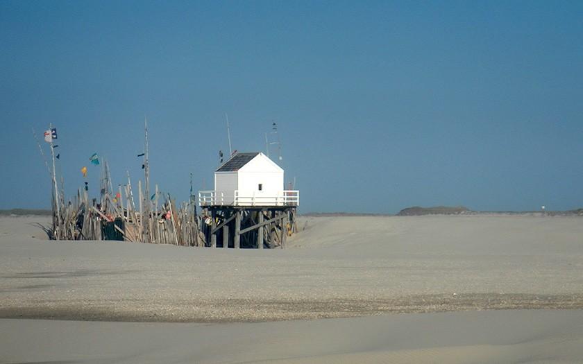Nederlandse Wadden Kenmerken En Weetjes Ecomare Texel