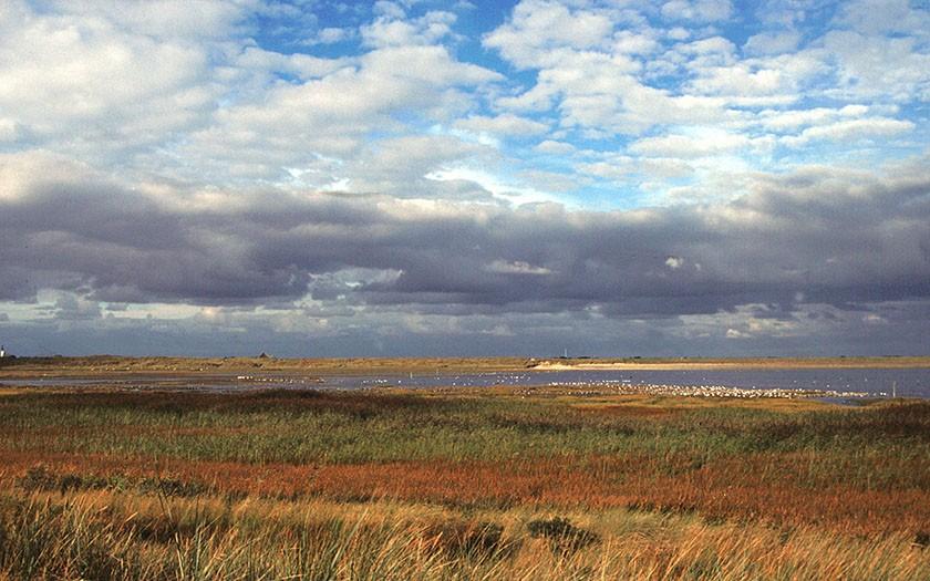 Mokbaai met foeragerende vogels (Foto: www.fotofitis.nl)
