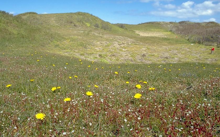 Bloemen en planten in de duinen