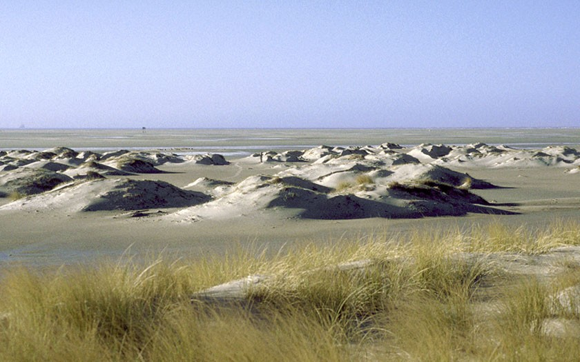Young dunes on the Hors (Photo: www.fotofitis.nl)