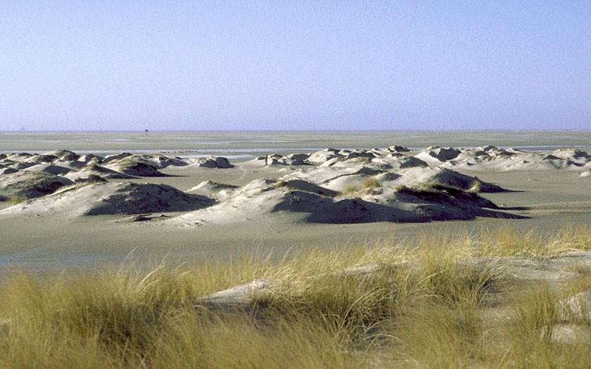 Jonge duinen op de Hors (Foto: www.fotofitis.nl)