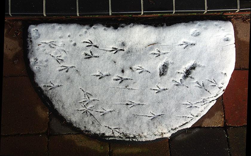 Vogelsporen op de deurmat