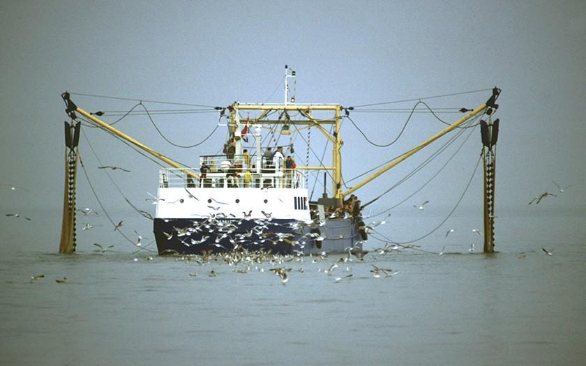 Vissersboot met achtervolgende meeuwen (© www.fotofitis.nl)