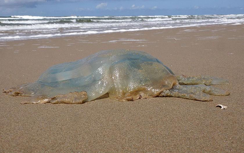Grote kwal op het strand
