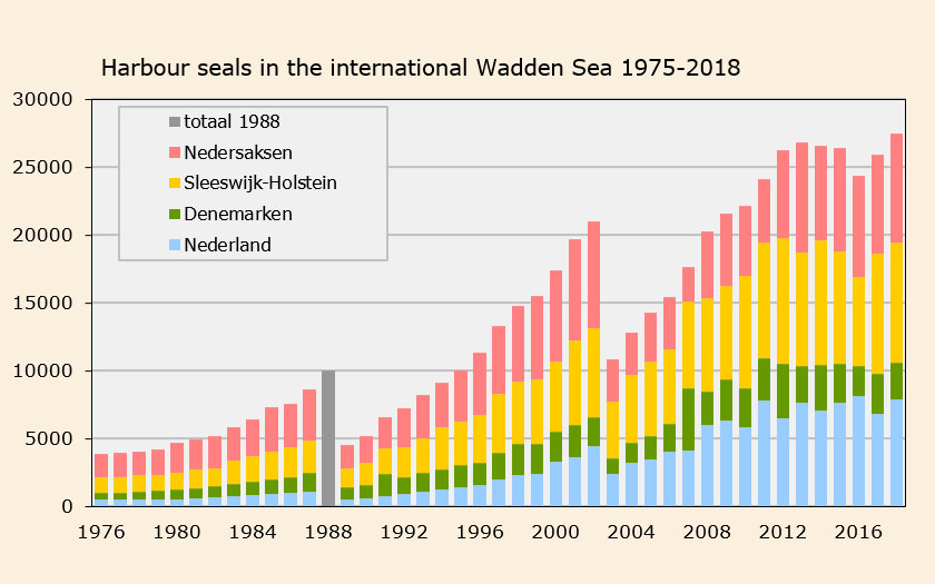 Harbour seal numbers in the international Wadden Sea