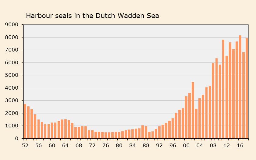 Number of harbour seals in the Dutch Wadden Sea