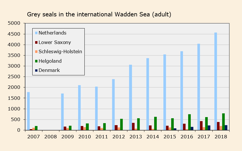 Number of adult grey seals in the international Wadden Sea