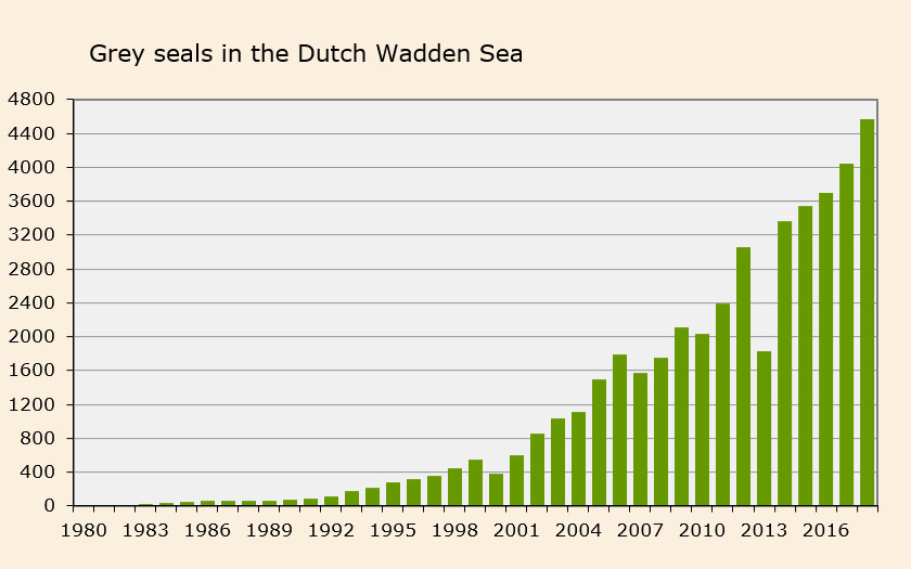 Number of grey seals in the Dutch Wadden Sea