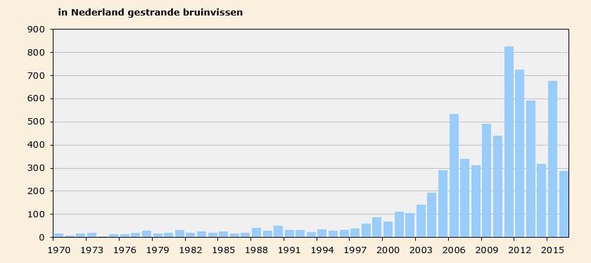 Gestrande bruinvissen in Nederland