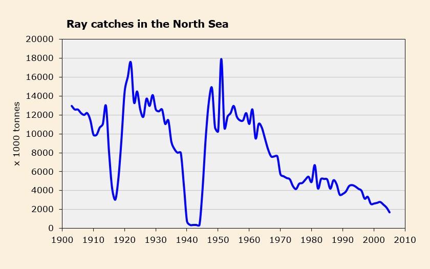 Graph rays in the North Sea (© Ecomare)