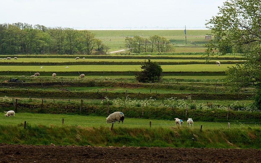Hoge Berg met tuinwallen op Texel