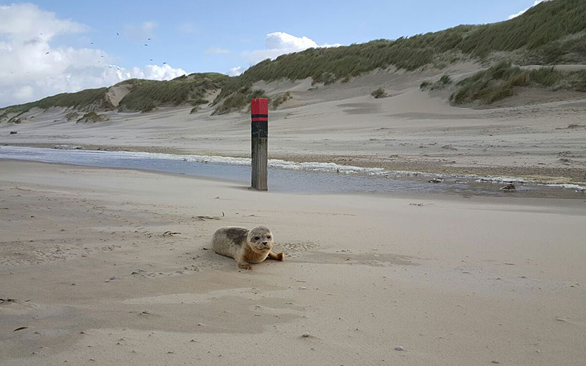 New-born seal on the beach