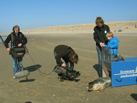 Pers aanwezig bij uitzetten van zeehonden
