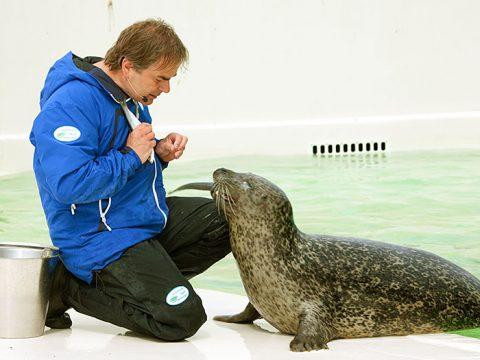 Dierverzorger Salko voert een van de zeehonden bij Ecomare
