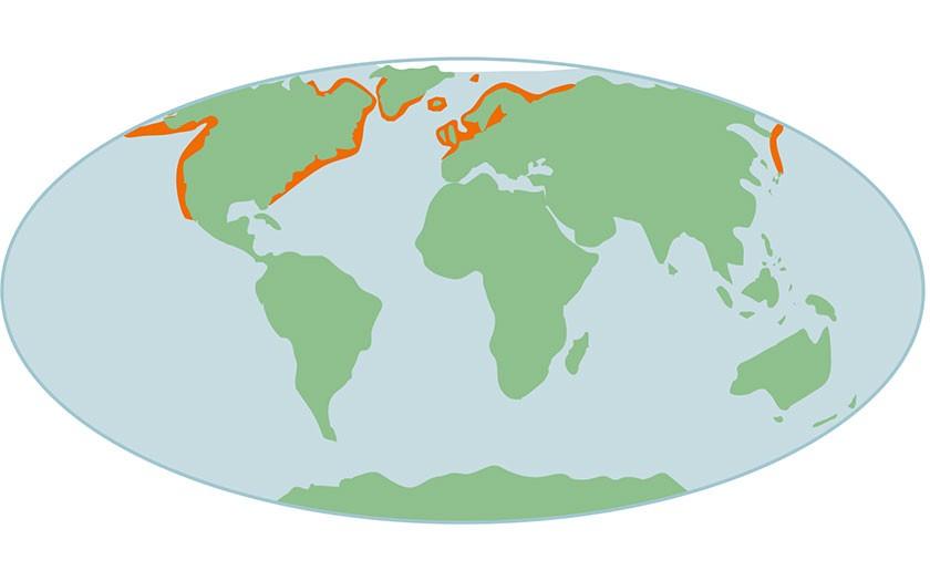 Kaart verspreiding van gewone zeehonden wereldwijd (© Ecomare)