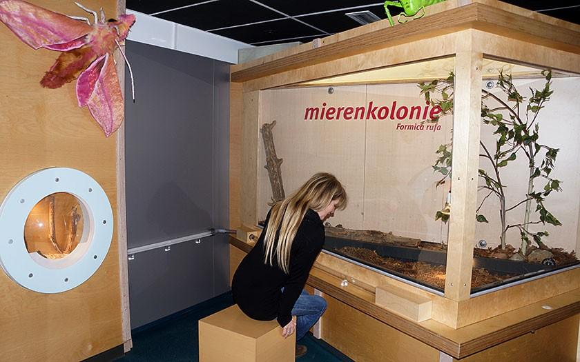 Vrouw bekijkt mierenkolonie bij Ecomare