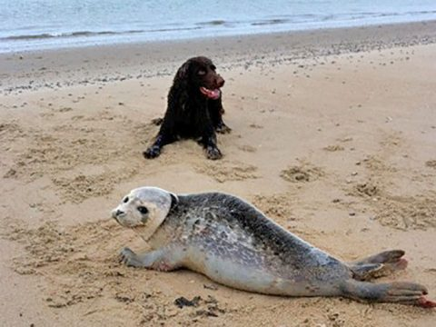 Hond naast zeehond op strand