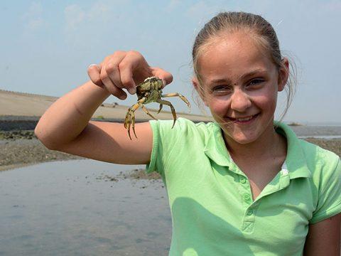 Meisje toont gevangen krab tijdens wadexcursie