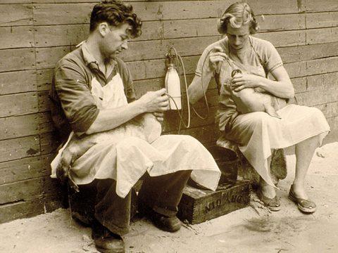 Gerrit en Annie de Haan ving als eerste in Europa zeehonden op