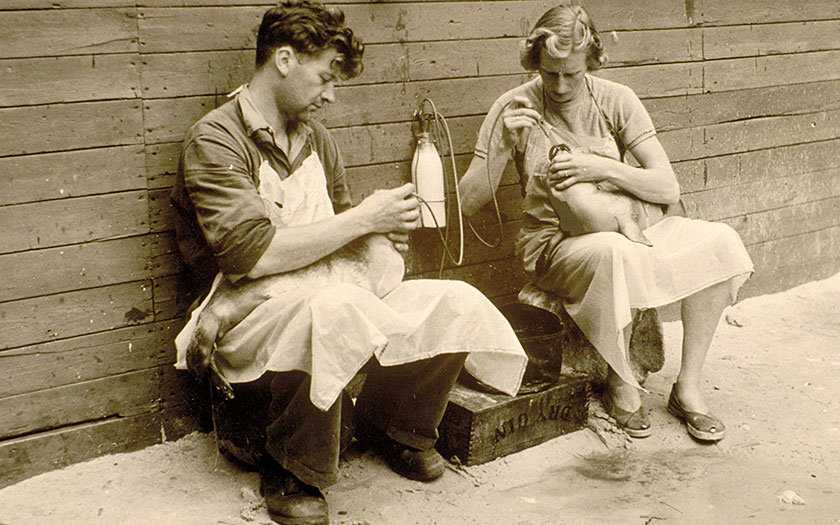 Gerrit and Annie de Haan were the first in Europe to care for seals