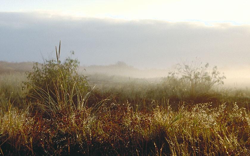 't Mientje, natuurgebied in de Dennen op Texel