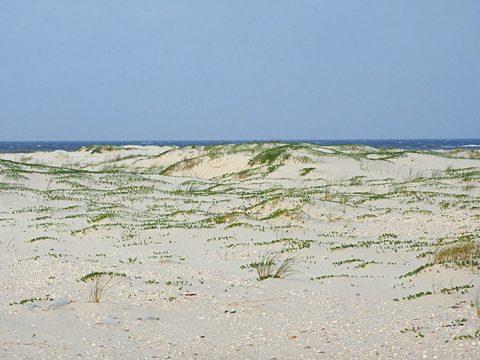 Strand met her en der een groen sprietje