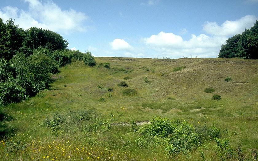 Insectenreservaat de Zandkuil