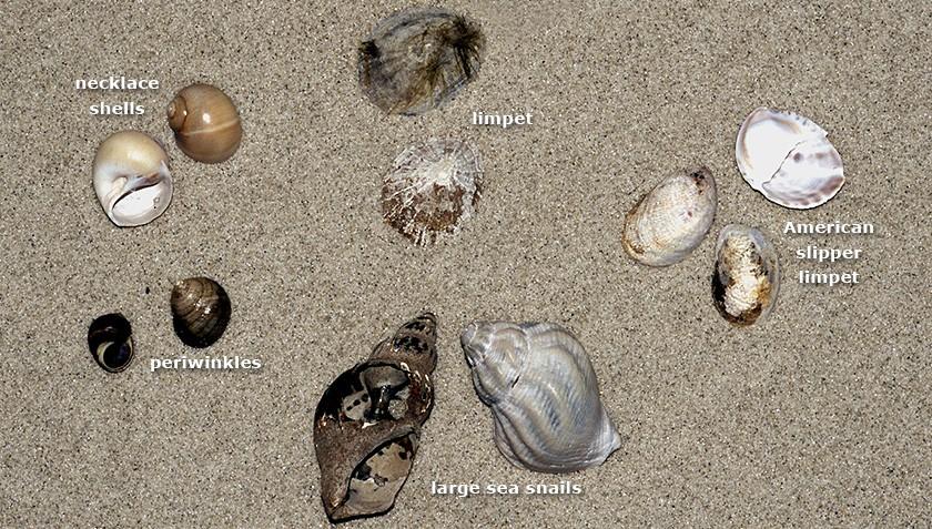 Various species of snails and sea slugs