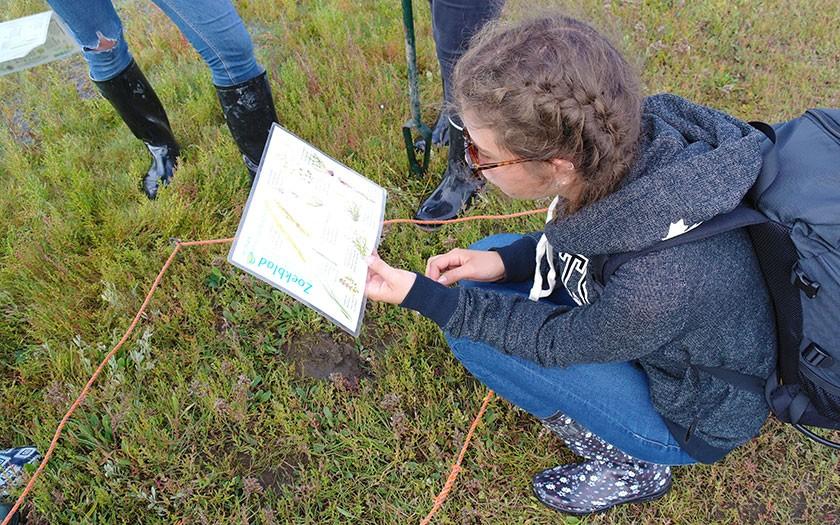Leerling inventariseert planten in de Slufter