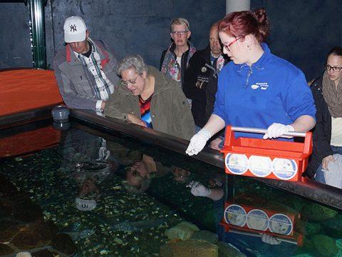 Nicolle loopt stage bij Ecomare in het Zeeaquarium