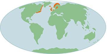 Kaart verspreiding grijze zeehond wereldwijd