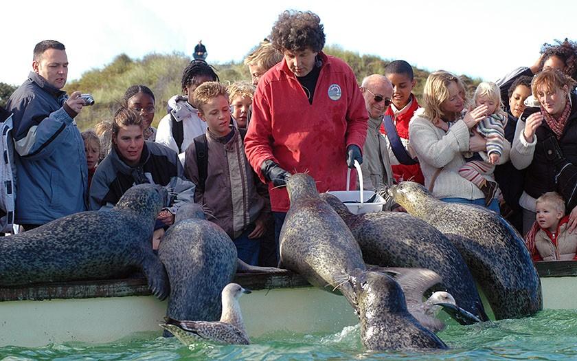 Henk Brugge, icoon van Ecomare, voert zeehonden bij Ecomare