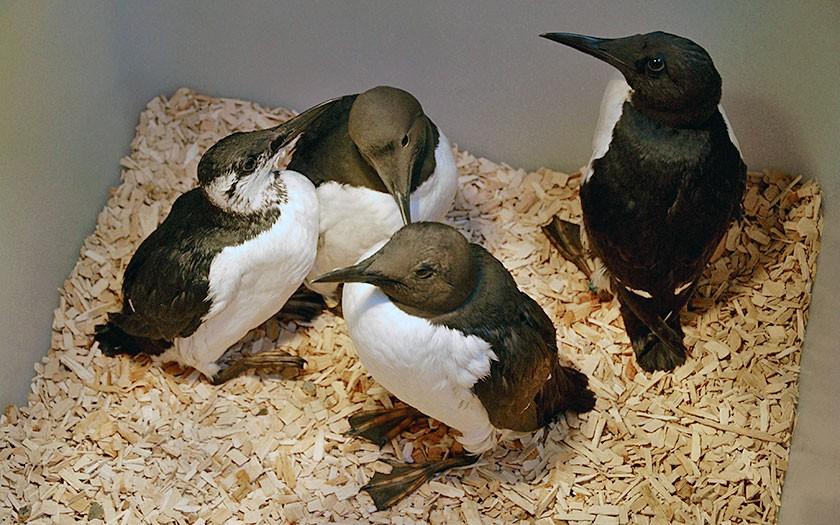 Zeekoeten in de vogelopvang