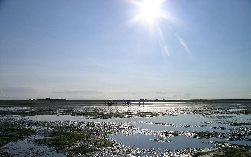The mud flats during low tide, and an excursion