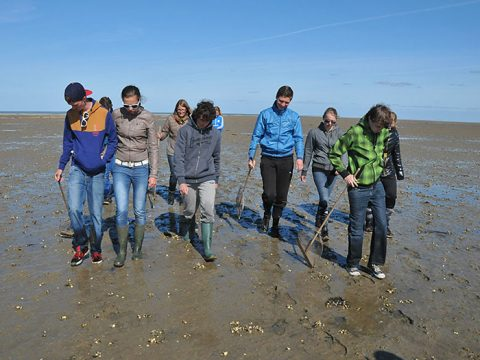 Leerlingen lopen over het wad