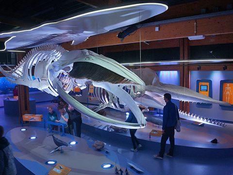Bezoekers bekijken grote walvisskeletten