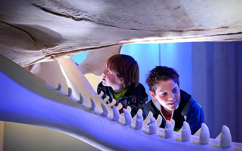 Jongens kijken naar potvisskelet in de walviszaal van Ecomare © Mike Bink fotografie