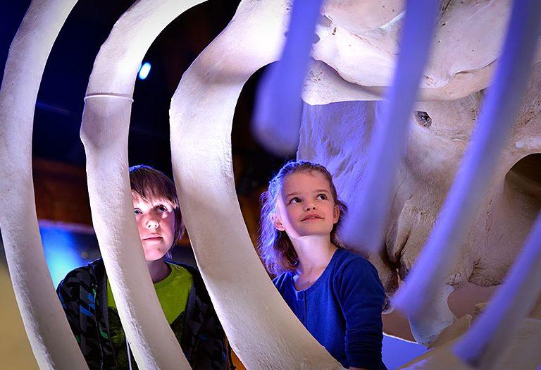 Kinderen bekijken skelet potvis in de walviszaal bij Ecomare