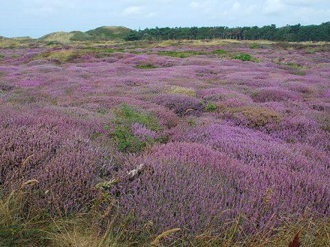 Westerduinen Texel