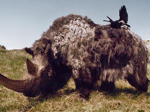 Model van een wolharige neushoorn
