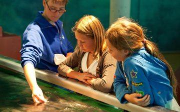 Fish are fed daily in the Sea Aquarium