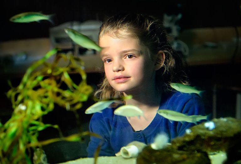 Jong meisje kijkt naar vissen in zeeaquarium