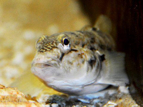 Vis in het zeeaquarium bij Ecomare